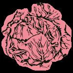 choux-rose